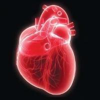 Американские учёные создали биологические кардиостимуляторы