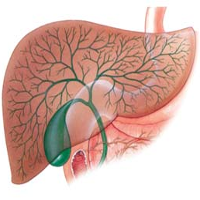 Препараты артишока в лечении дисфункции желчного пузыря